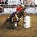 fiera cavalli-verona